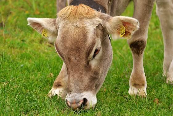 The environmental impact of farming